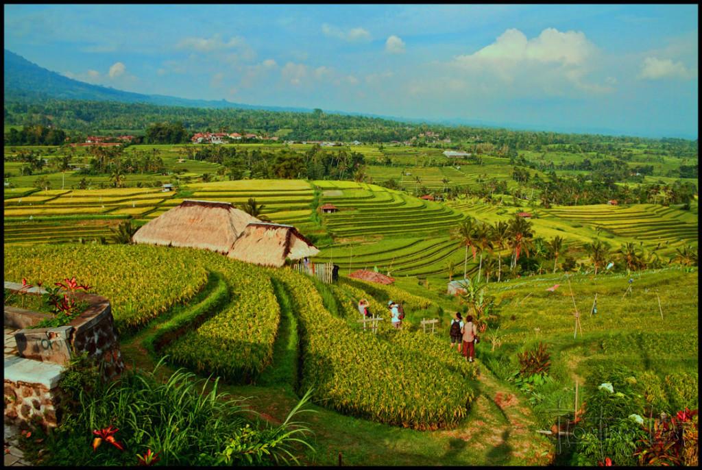 Bali healer yoga retreat