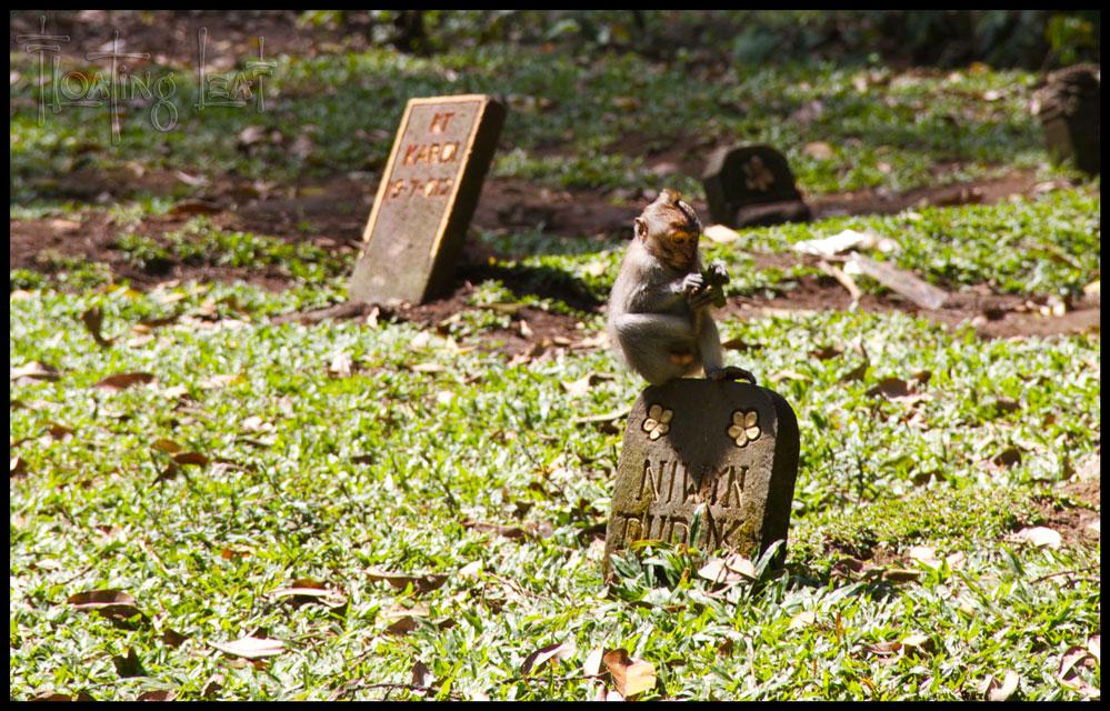 Bali-monkey-forest-yoga-cemetary
