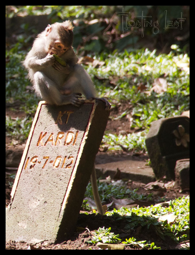 Bali-monkey-retreat-yoga-cemetary