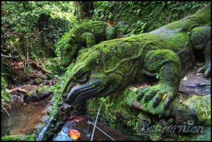 bali-komodo-dragon-monkey-forest