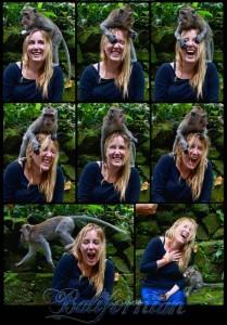 bali-tour-monkey-april