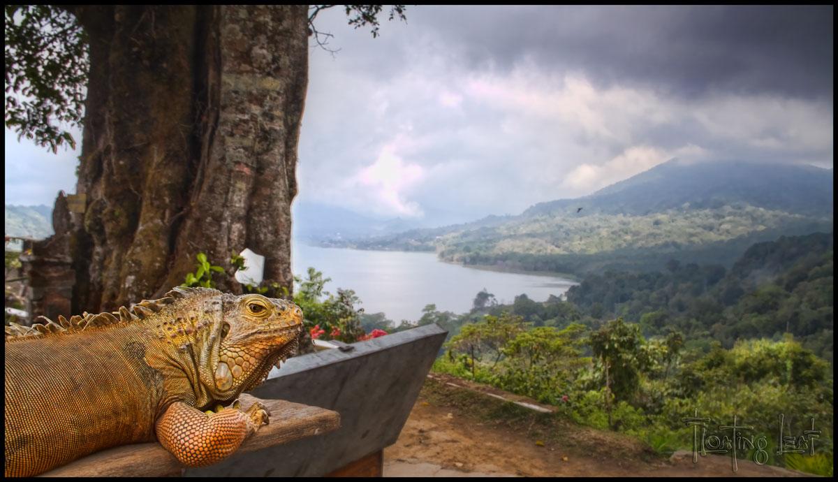 Bali-retreat-iguana-lake
