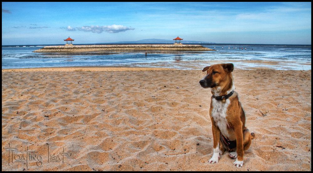 Beach Yoga Bali Yoga Retreat Beach