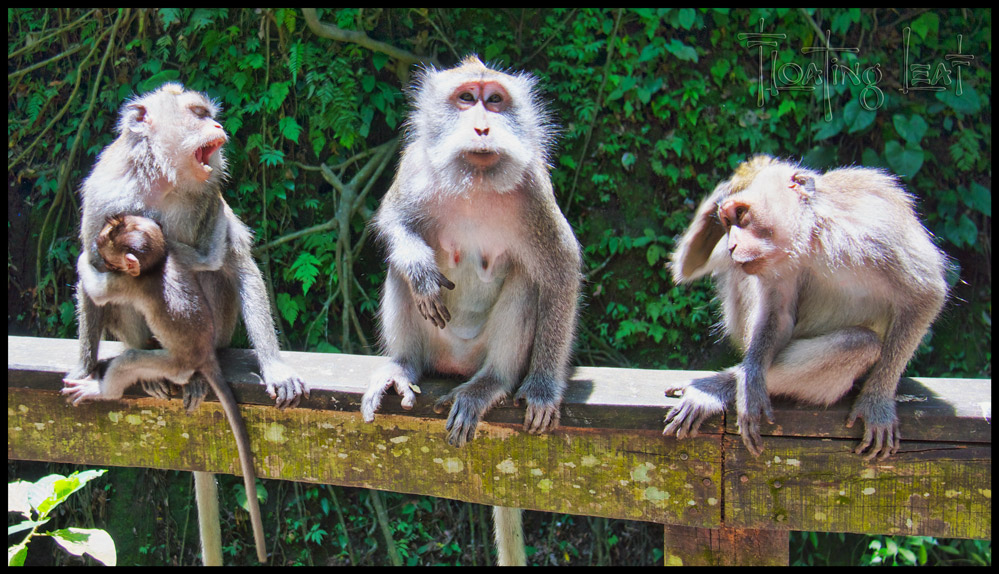 Bali's Monkey Forests