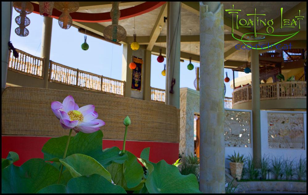 Floating Leaf Eco-Retreat with brilliant lotus