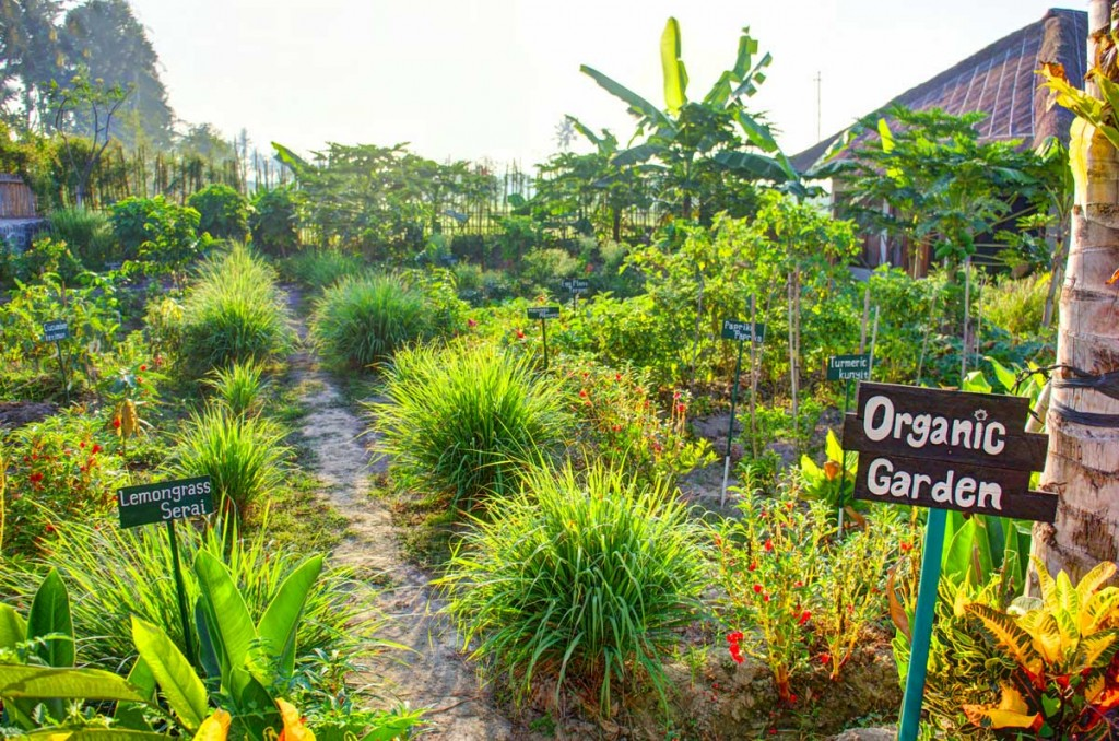 Bali permaculture design course and retreat for Jardin permaculture