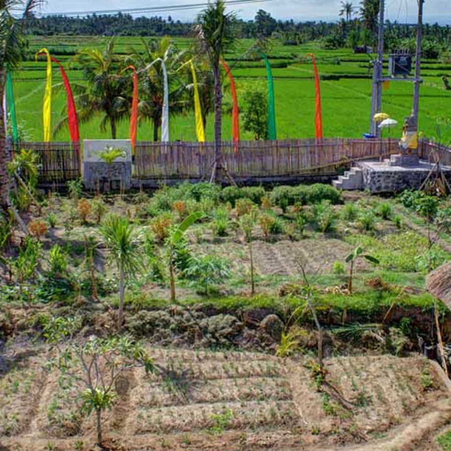 Backyard Erfly Garden Garden Permaculture Garden Ftempo