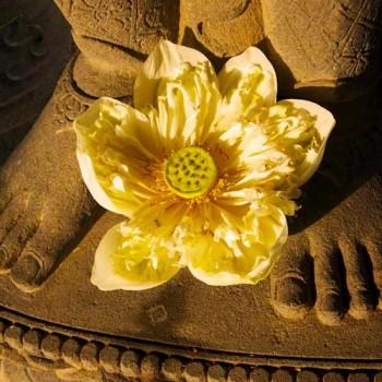 Lotus flower spiritual