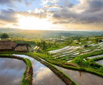 bali-yoga-rice-retreat